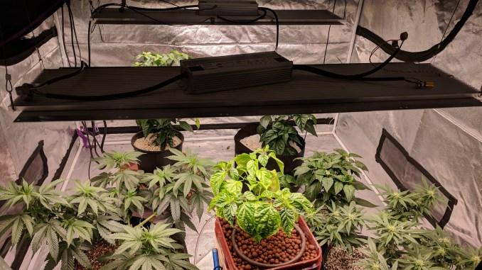 Indoor plant farm